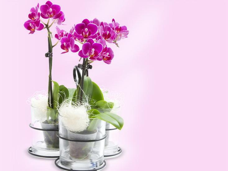 цветы бизнес